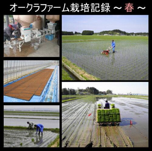 28年産 宮城県登米産ひとめぼれ 25kg[白米/無洗米]選択可能小分け(5kg×5袋)可能