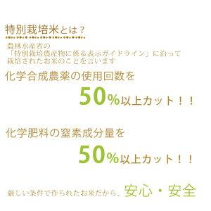 令和2年度特別栽培米こしひかり100%5Kg