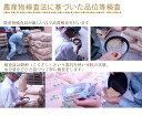 【滋賀湖北産】有機JAS認定こしひかり 5kg×2袋 2