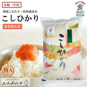 令和2年度特別栽培米こしひかり5Kg