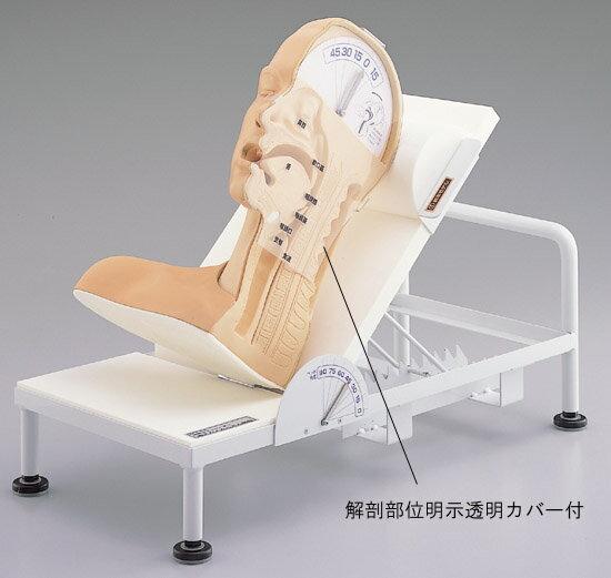 《坂本モデル》嚥下のメカニズム模型