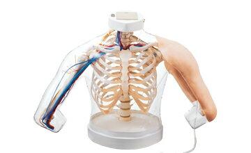 《坂本モデル》上腕部筋肉注射説明模型