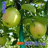 【訳あり】甘い青りんごの代表格!甘さと香りの『王林』5kgダンボール・モールドパック詰(約14〜20玉入)