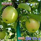 【予約】【訳あり】甘い青りんごの代表格!甘さと香りの『王林』3kgダンボール・モールドパック詰(約9〜12玉入)