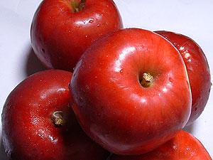 生食はもちろんお菓子用にも!酸っぱ~い小玉りんご訳あり『紅玉』4.3kgダンボール・モールドパ...
