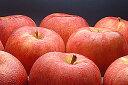 果肉活き活きもぎたて旬りんご発送!2010年この秋一番のりんご「サンつがる」訳あり品5kg詰(約...