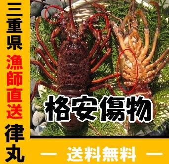 送料無料!三重県産 活伊勢海老漁師直送 律丸 伊勢えび/...