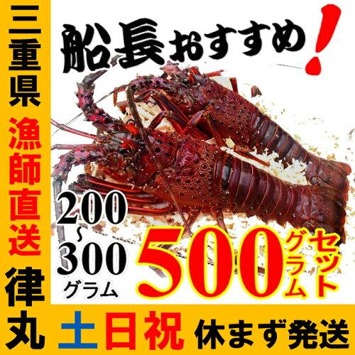三重県産活伊勢海老漁師直送 律丸 軍手、簡単レシ...