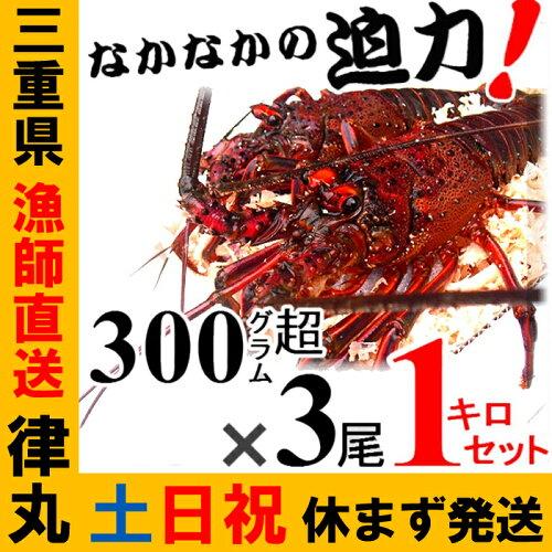 三重県産活伊勢海老漁師直送 律丸 伊勢えび/イセエビ...
