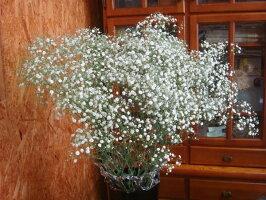 花束に添えるかすみ草