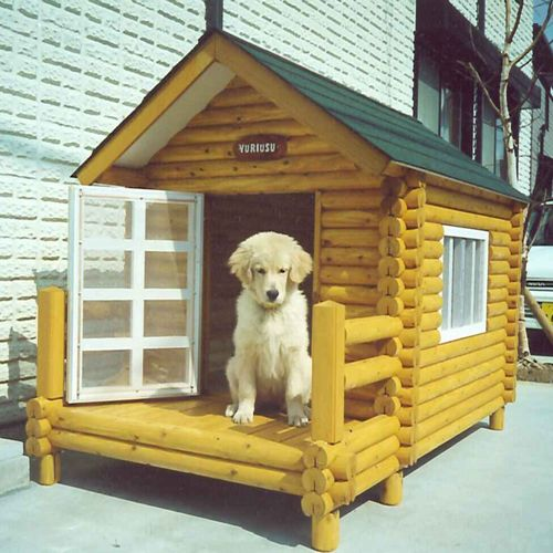 Dog Lives In A Kennel Pictures