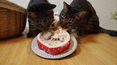 ◆ほねほねフィッシュのハートケーキ【まぐろ】◆猫用ケーキ,犬用ケーキ,ペット用ケーキ