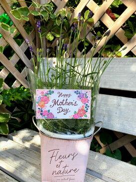 母の日 ギフト プレゼント 鉢植え ラベンダー