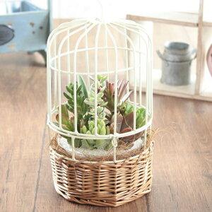 鳥かごポッドに多肉植物を寄せ植えた観葉植物。動物フィギュアを入れることでもっと可愛らしく...