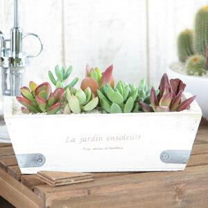 シンプルなウッドプランターに寄せ植えた観葉植物 多肉植物。癒しのインテリアグリーンをお届け...