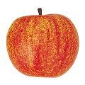食品サンプルフルーツ・果物60mmアップル