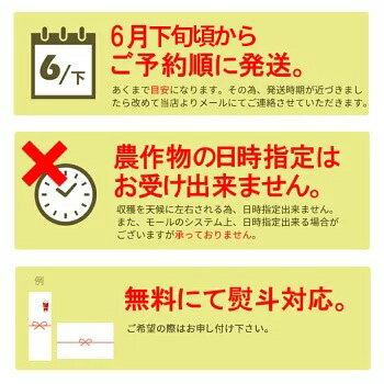 さくらんぼ佐藤錦9
