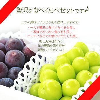山形県産ぶどう・シャインマスカット6