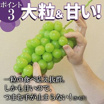 山形県産ぶどう・シャインマスカット4