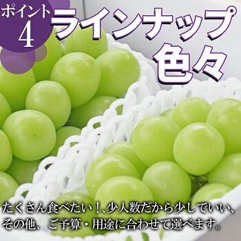 山形県産ぶどう・シャインマスカット5