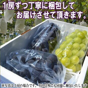 山形県産ぶどう・シャインマスカット7