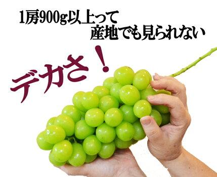 山形県産ぶどう・シャインマスカット8