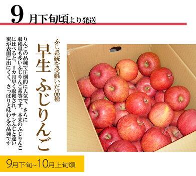 りんご15