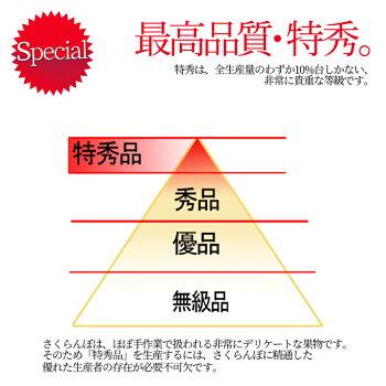 特秀さくらんぼ佐藤錦2
