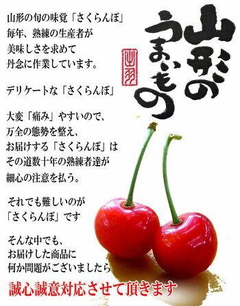 特秀さくらんぼ佐藤錦11