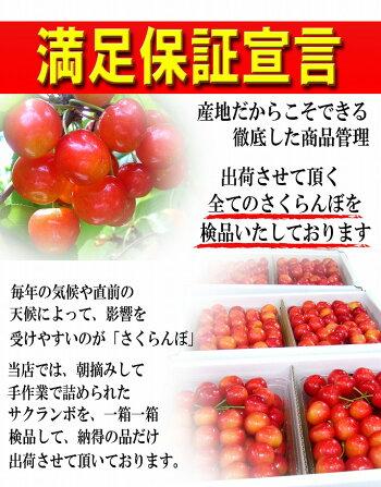 特秀さくらんぼ佐藤錦12