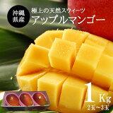 【送料無料】沖縄県産アップルマンゴー2玉入り(約500g)