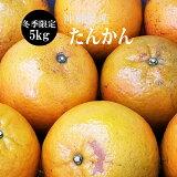 【送料無料】沖縄県産たんかん5Kg(M〜3Lサイズ)