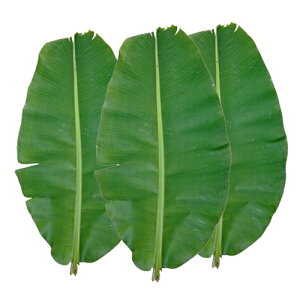 (送料無料) 沖縄県産バナナの葉(3枚)
