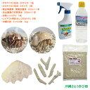 オカヤドカリ飼育セット SSサイズ&Sサイズ(生体・環境改善液・海水・シャコガイ・サンゴ・砂) その1