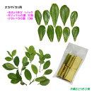 【送料無料】オカヤドカリ用(サトウキビ、ガジュマルの葉30枚、クサトベラの葉10枚)