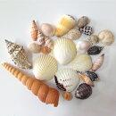 貝殻セット(25個入)フォトフレーム・ハンドクラフト用パーツ