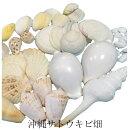 貝殻セット【白色】(貝殻40個入)