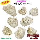 【送料無料】琉球石灰岩洗浄済中サイズ8〜9個