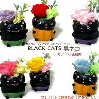 安いプリザーブドフラワーアレンジバラ枯れない花猫黒ネコプチギフト全6色展開ケース付