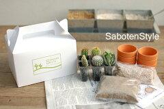 サボテンの植え込みにチャレンジ♪好きなサボテンが6種類選べます!【サボテン・多肉植物 6種類...