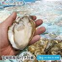 送料無料 宮城県産 殻付き 活牡蠣 3kg ※大小混合で約30〜50個 【加熱用