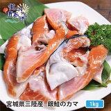 送料無料 産地直送 三陸産 銀鮭カマ500g×2パック※1kg かま 焼き魚 さけ サケ  ※只今のお届けはヒレ付きです