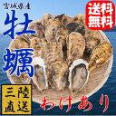 有数の名産地の訳あり牡蠣!訳があるのは見た目だけ〜◆殻付き牡蠣[20個入]宮城県産地直送品...
