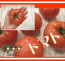 トマト とまと