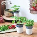 【染付小紋薬味小鉢】染付小紋小鉢で育てる野菜栽培キット 選べ
