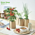 育てるスープペーパーバッグで野菜を育てる栽培キット(インテリアグリーンおしゃれかわいい栽培セットハーブ家庭菜園)