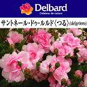 即納【バラ苗】 デルバール サントネール ドゥ ルルド〈つる〉 大苗 7号鉢 ピンク系 CL