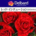 デルバール レット インテューションバラ苗 2012年予約苗 デルバール レット インテューション...