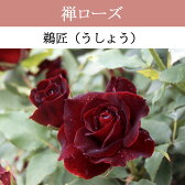 【バラ苗】 禅ローズ  鵜匠 大苗 7号鉢 赤系 HT