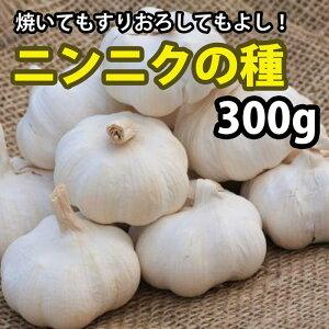 国産ニンニクの種 300g(充填...
